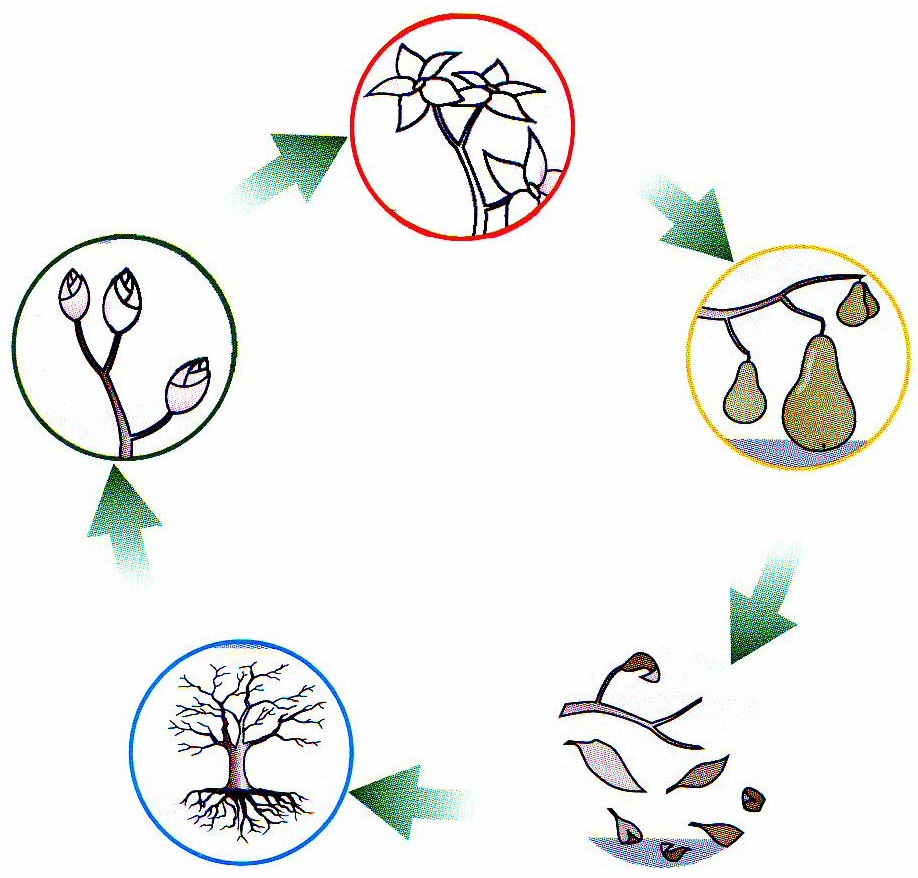 ein tag im geist der fünf elemente | balance & spirit