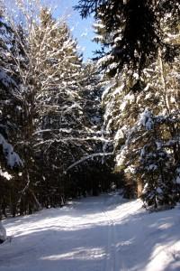Winterlandschaft rund um Zwiesel